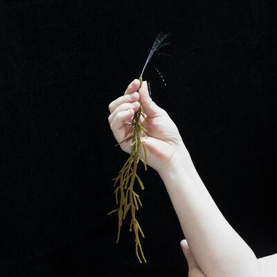 Nina Röder, 'algenhand', 2012