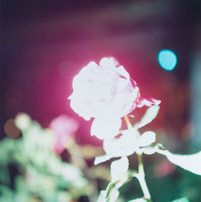 Rinko Kawauchi, 'Untitled, from the series Illuminance', 2009