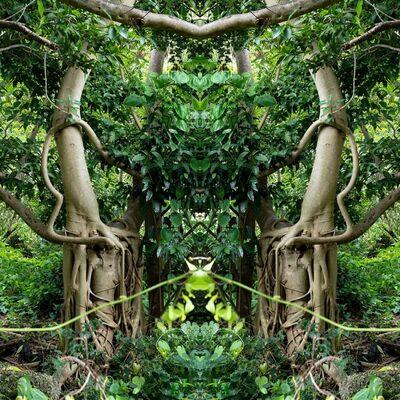 Khotan Fernandez, 'Enchanted Forest IV', 2019