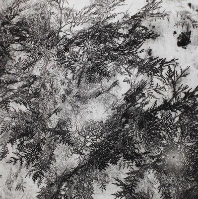 Xiaoyi Chen, 'Pine', 2014
