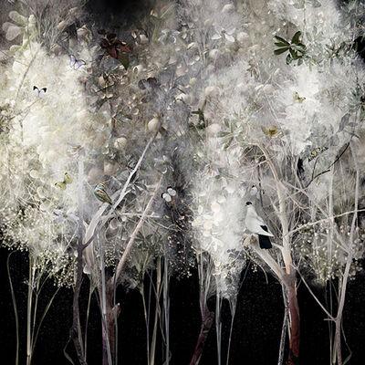 Ysabel Lemay, 'Illuminated', 2011