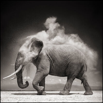 Nick Brandt, 'Elephant With Exploding Dust, Amboseli', 2004