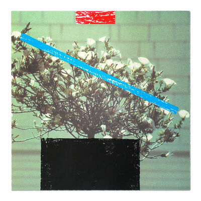"John Baldessari, 'Flower (#1 from ""Third Street, Santa Monica"")', 2000"