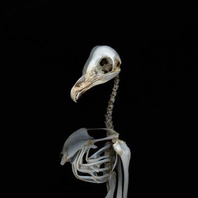 Deborah Samuel, 'Owl II', 2011
