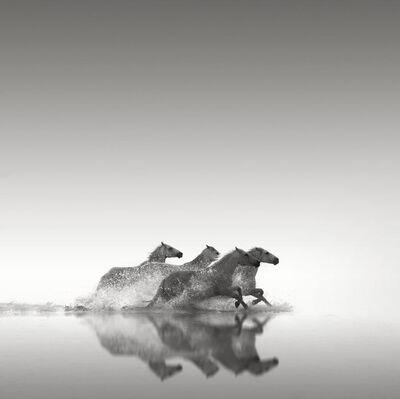 Jonathan Chritchley, 'Four Horses, Camargue', ca. 2010