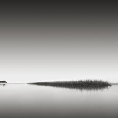 David Fokos, 'Reeds, Edgartown, Massachusetts ', 2012