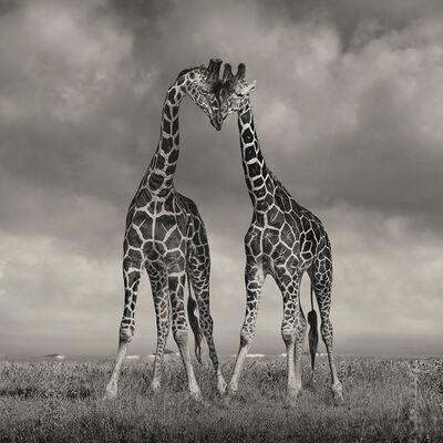 David Burdeny, 'Two Giraffes, Amboseli', 2020