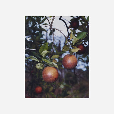 Roe Ethridge, 'Orange Grove #6', 2004
