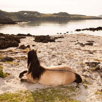 Muir Vidler, 'Horse, Beach, Isle of Muck', 2014