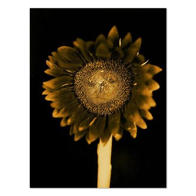 Chuck Close, 'Sunflower', 2011