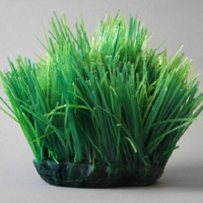 Carson Fox, 'Grassy Spot'