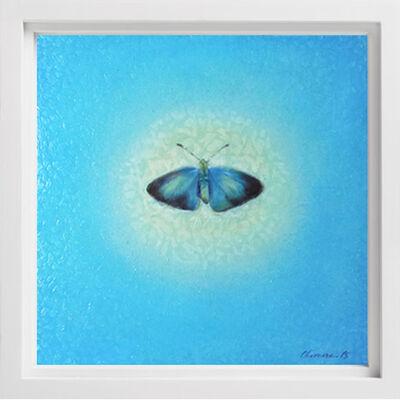 Melissa Chimera, 'Koa Butterfly', 2017