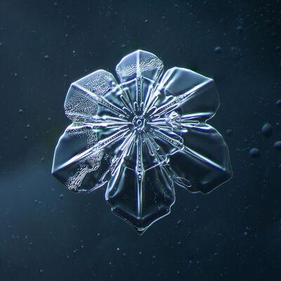 Douglas Levere, 'Snowflake 2014.02.09.011', 2014