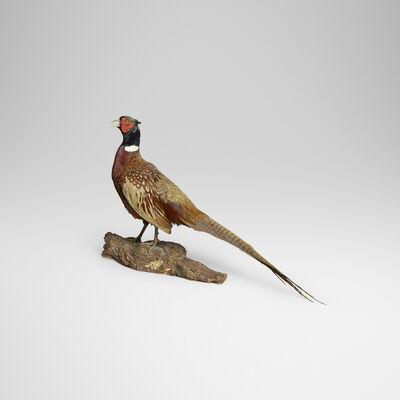 Ole Hoegh Post, 'Pheasant'