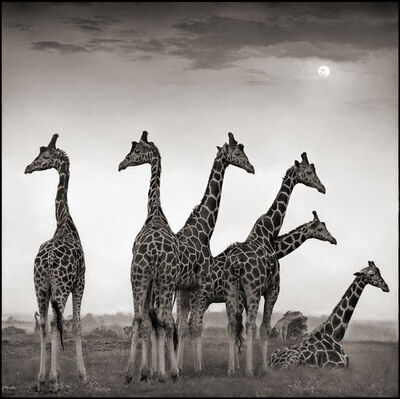 Nick Brandt, 'Giraffe Fan', 2000