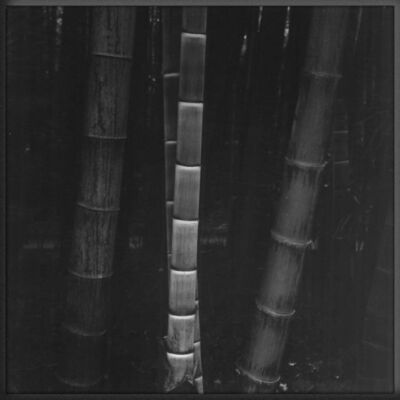 Balthasar Burkhard, 'Bambus 02', 1990-1991