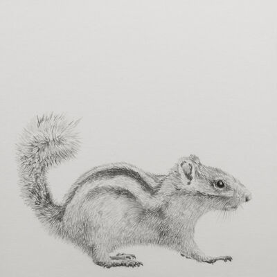 "Carlos Alarcón, '""Squirrel"" from the series ""Paradoxes""', 2018"