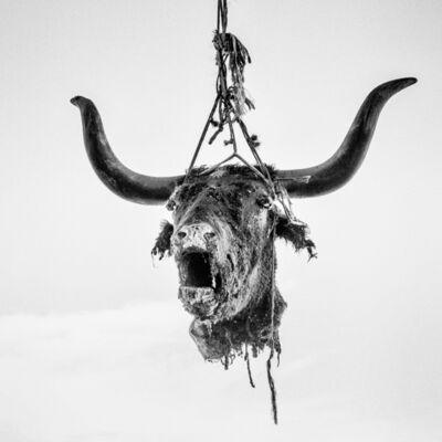 Matt Black, 'Head of a dead bull hung to dry. Firebaugh, CA. ', 2014