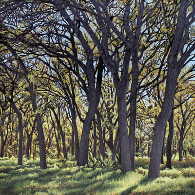 Garrett Middaugh, 'Onion Creek Park Trees I'