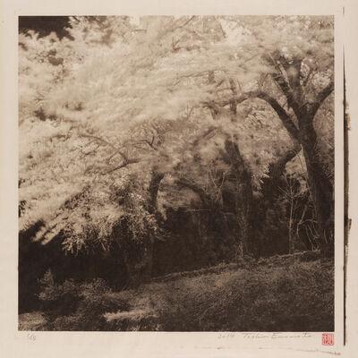 Toshio Enomoto, 'Yama-Zakura Surviving a Spring Breeze 2, Ogatsumachi, Akita', 2014