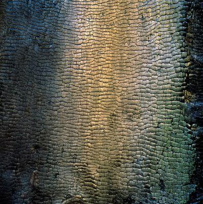 Christopher Burkett, 'Iridescent Charred Tree, California', 1996