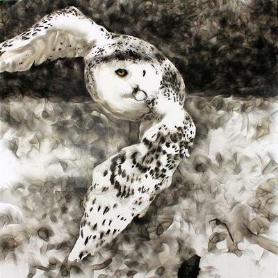 Steven Spazuk, 'Smoky Owl', 2017