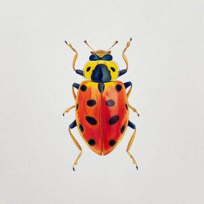 Hannah Hanlon, 'Coleoptera Chroma #11', 2020