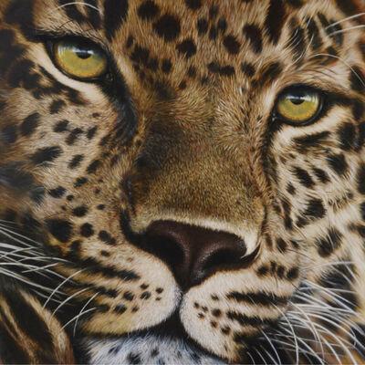 Stefano Zagaglia, 'Leopard portrait', 2015
