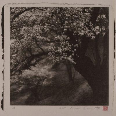 Toshio Enomoto, 'Large Wild Cherry tree at Nitta, Fukushima', 2014