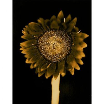 Chuck Close, 'Sun Flower', 2011