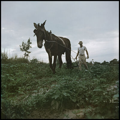 Gordon Parks, 'Willie Causey, Mobile, Alabama (Mule Plowing 37.051)', 1956