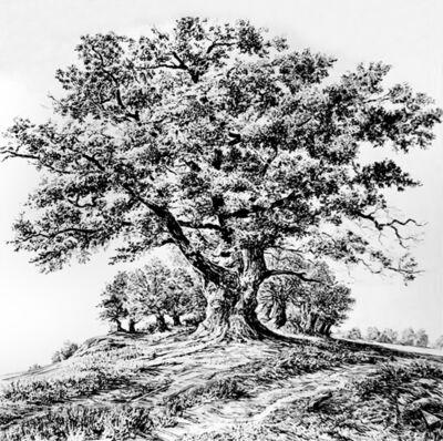 Rick Shaefer, 'Lone Oak on Hill', 2021