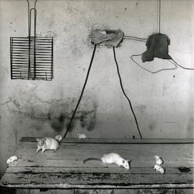 Roger Ballen, 'Rats on kitchen table', 1999
