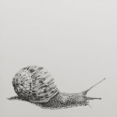 "Carlos Alarcón, '""Snail"" from the series ""Paradoxes""', 2018"