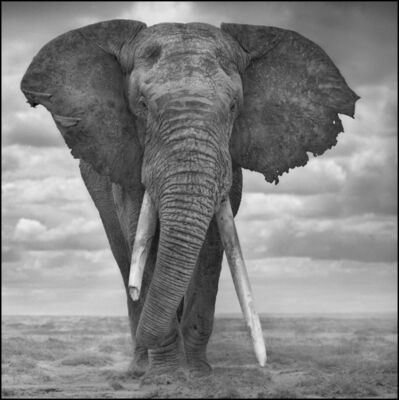 Nick Brandt, 'Elephant Sails', 2008