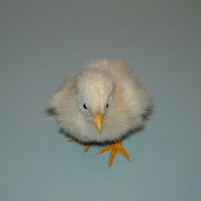Hiroshi Watanabe, 'Chick', 2009