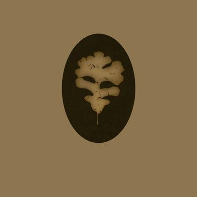 Kate Breakey, 'Oak Leaf'