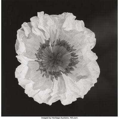 Robert Mapplethorpe, 'Poppy', 1988
