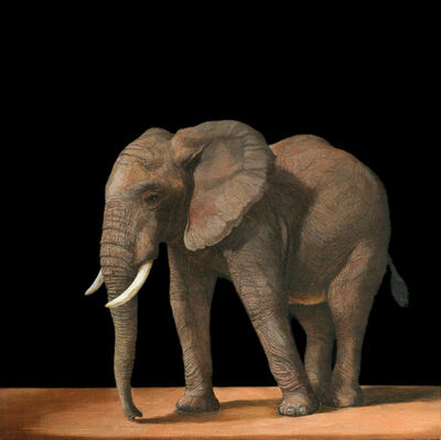 Patricia Traub, 'Young African Elephant', 2020