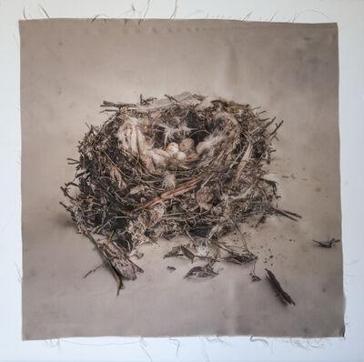 Kate Breakey, 'Nest 32', 2010-2019