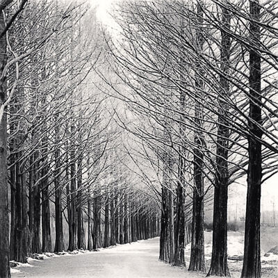 Michael Kenna, 'Alley of Trees, Damyang, Jeollanamdo, South Korea', 2012