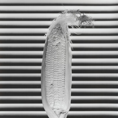Robert Mapplethorpe, 'Corn', 1985