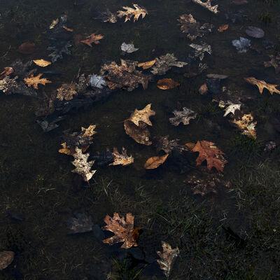 Cig Harvey, 'Thre Leaves', 2012