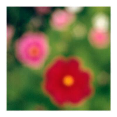 John Huggins, 'Flora #7', 2019