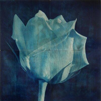 James Holroyd, 'Rose 3', 2013