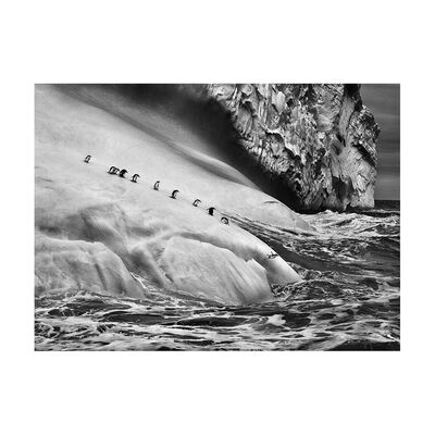 Sebastião Salgado, 'Chinstrap Penguins on an iceberg located between Zavodovski and Visokoi islands. South Sandwich Islands. ', 2009