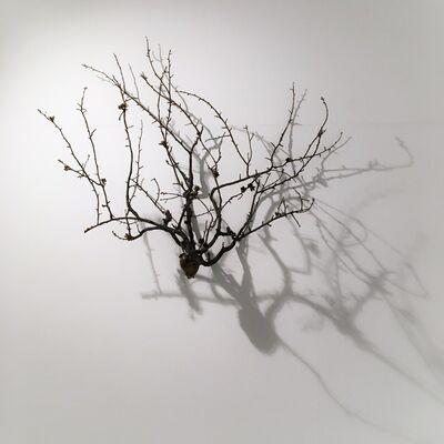 Javier Pérez, 'Brotes III', 2017