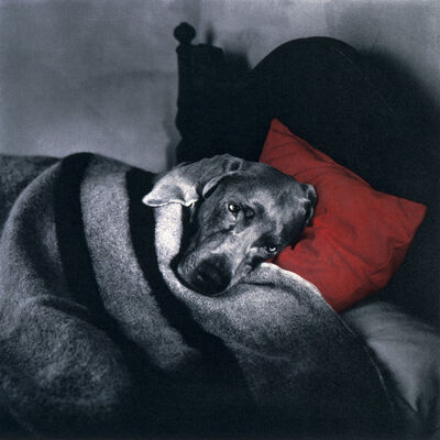 William Wegman, 'Cinderella Sleeping', 1994
