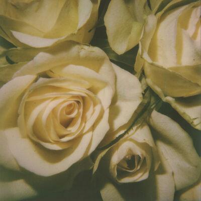 Kirsten Thys van den Audenaerde, 'Kiss from a Rose', 2019