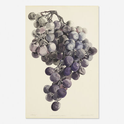 Don Nice, 'Minneapolis Grapes (Study)', 1967